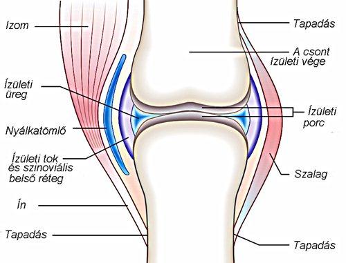 Osteophyta térd
